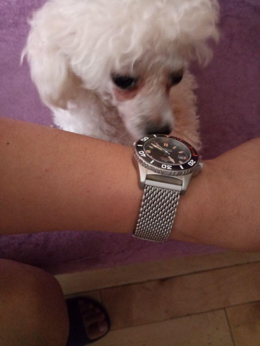 迪沃斯16152060手表【表友晒单作业】手表是自己...