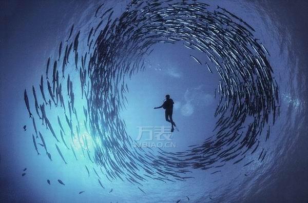 海洋摄影师戴什么手表?劳力士海使型4000带您征服深海