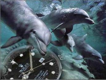 劳力士手表是哪个国家的?劳力士手表标志是什么?