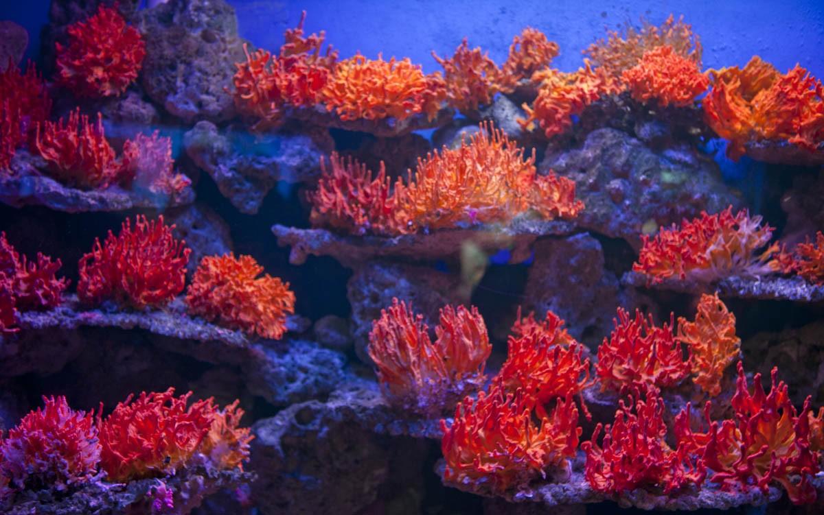 中国海警在南海海域连破非法猎捕红珊瑚案,非法金额达亿元